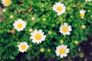 季節のお花の写真